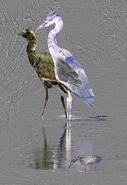Difference between 2 heron images